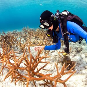 Duurzaam-Aruba